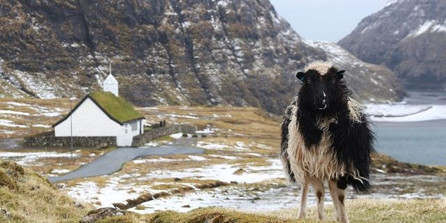sheep and snow crusted rural mountain landscape