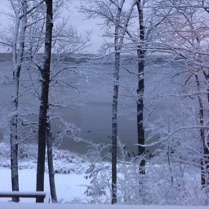 six snow covered trees on a hill overlooking a lake with ducks