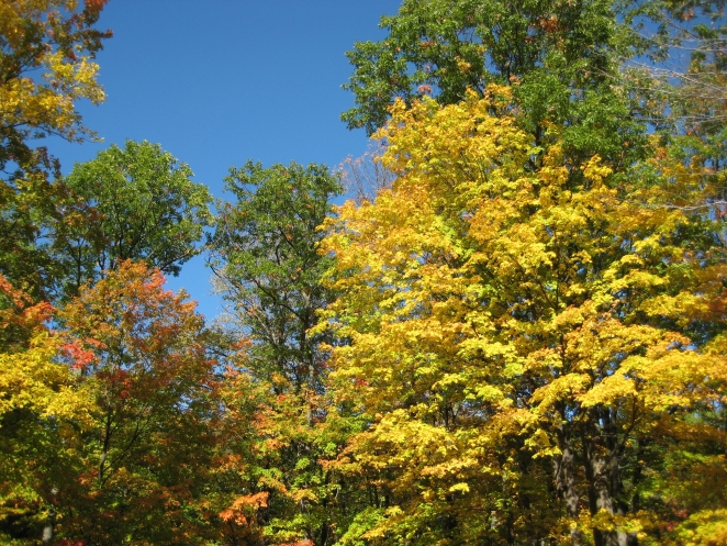 fall colored trees and a blue sky